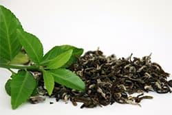 зеленый-чай-при-лечении