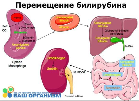 Рифампицин при гепатите с