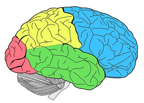 Важно знать основные виды и признаки менингита