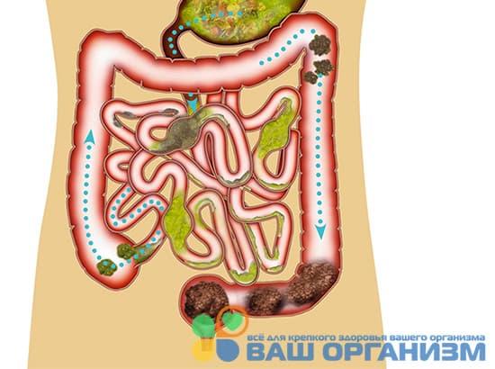 10 лучших народных способа чистки кишечника