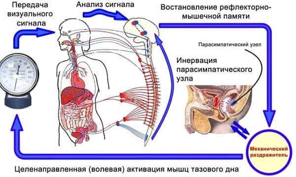 Лечение аденомы предстательной железы перекисью водорода по неумывакину
