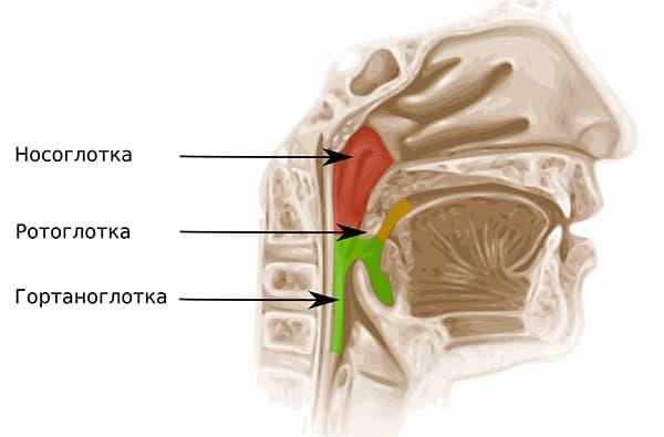 Способы лечения рака гортани, стадии и степени его развития