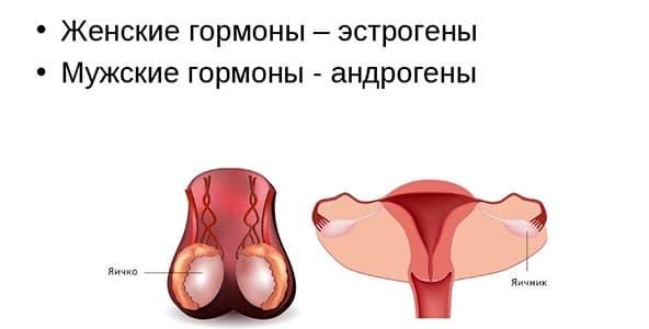 Что нужно знать о гормонах при лечении простатита