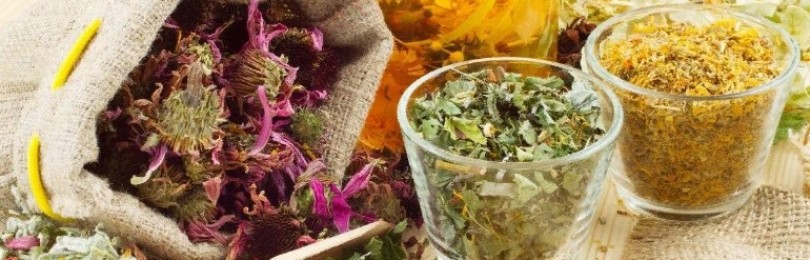 Полезный травяной чай: какие травы благоприятно воздействуют на организм