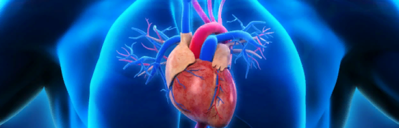 Какие 2 продукта кардиологи категорически не рекомендуют употреблять при гипертонии