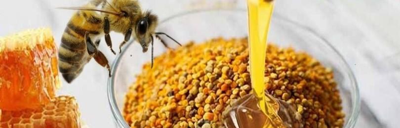 Польза пчелиной пыльцы при лечении заболеваний