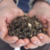 Пчелиный подмор при простатите – полезные свойства, рецепты, применение