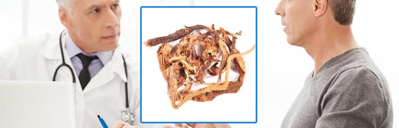 Лечение простатита и аденомы простаты красным корнем — описание свойств, рецепты