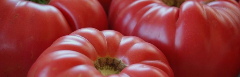 Топ 10 крупных и неприхотливых сортов томатов