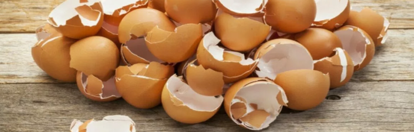 Полезные свойства яичной скорлупы