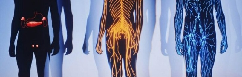 Факты о нашем организме, которых вы не знали. Часть I