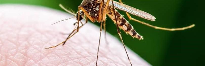 Почему укус комара чешется