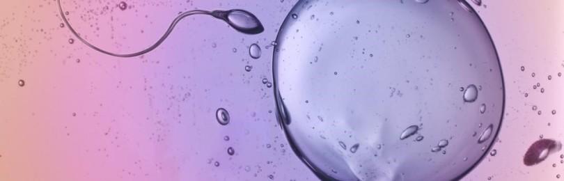 Сперматозоиды в организме женщины: сколько живут, когда погибают