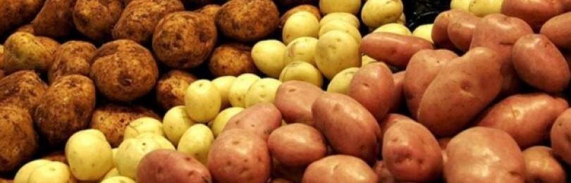 Как часто можно есть картофель без вреда для здоровья