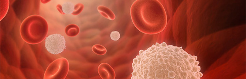 Какие функции выполняет и из чего состоит кровь человека?