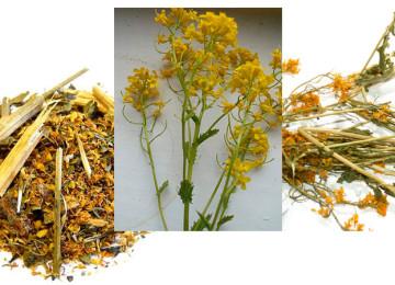Сурепка «Мужская трава» при простатите: 5 способов применения