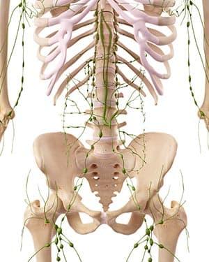 Расположение лимфом на теле человека