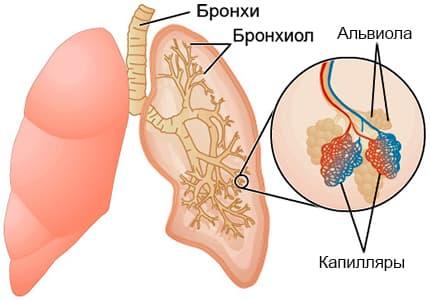 Альвеолит легких рисунок