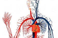 5 фактов о вегето-сосудистой дистонии