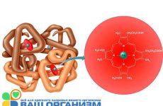 Гемоглобин — комплексный белок крови, каковы его нормы?
