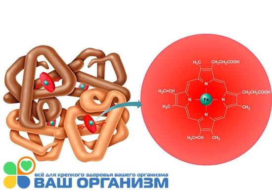 уровень гемоглобина рисунок схема