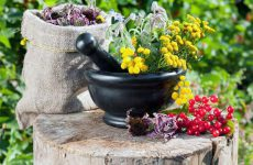 Верные пути лечения простатита травами